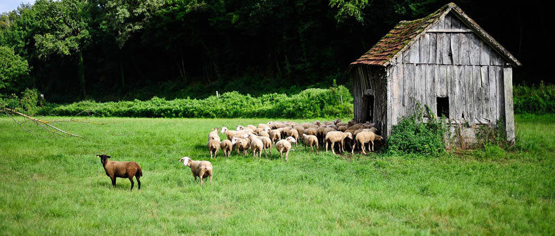 Vallee dordogne - Moutons©OTVD-Cochise Ory